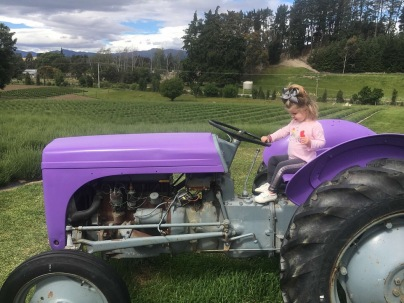 Purple Tractor, Wanaka Lavender Farm